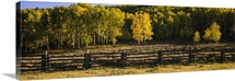 Wooden fence and Aspen trees in a field, Telluride, San Miguel County, Colorado