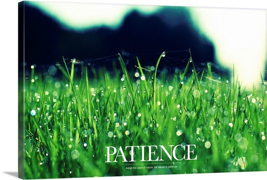 Inspirational Motivational Poster: Adopt the pace of nature; her secret is patience
