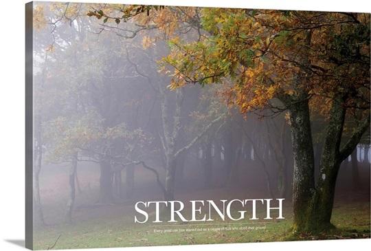 Inspirational Quotes Oak Tree. QuotesGram