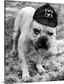 Mississippi State Pictures Bully with a Hat On