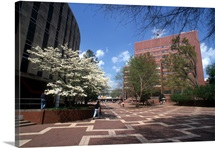 NC State University Photographs Brickyard Blooms