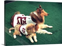 Texas A&M Pictures Reveille and Trainee