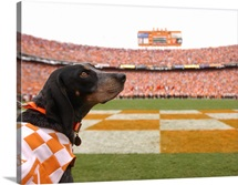 UT Photographs Smokey Looks Back