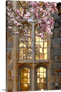 Yale Photographs Sunlight on Yale Windows