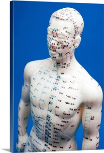 Chinese acupuncture model