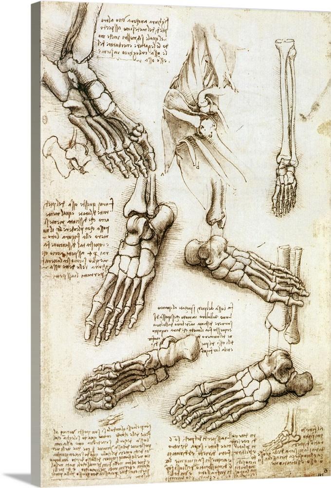 Premium Thick-Wrap Canvas Wall Art entitled Foot anatomy by Leonardo ...