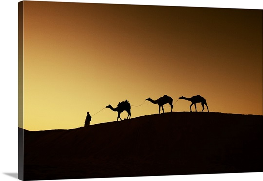 Camels and their owner at sunset, Rajistan, India