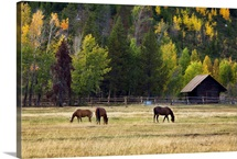 Western Horses, Jackson Hole, Wyoming