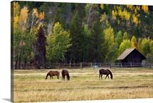Western Horses, Jackson Hole, Wyoming