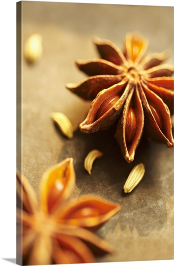 Star Anise Pods Photo Canvas Print   Great Big Canvas