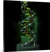 3D illustration of DNA components functionally compared to a chain link