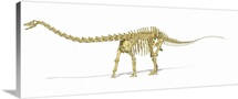 3D rendering of a Diplodocus dinosaur skeleton, side view