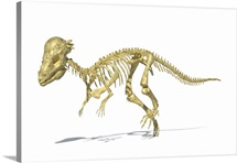 3D rendering of a Pachycephalosaurus dinosaur skeleton, perspective view