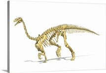 3D rendering of a Plateosaurus dinosaur skeleton, perspective view