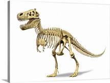 3D rendering of a Tyrannosaurus Rex dinosaur skeleton