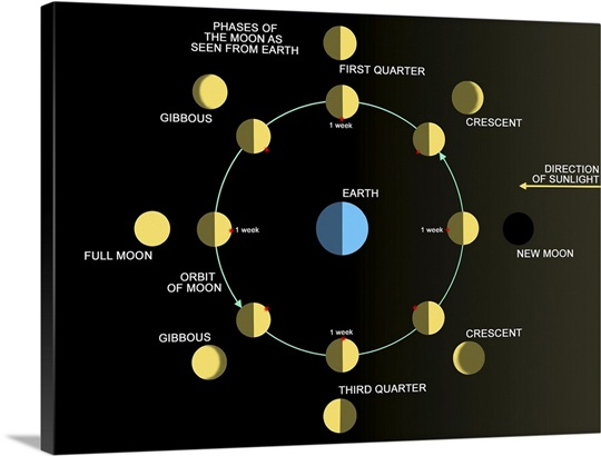 A Diagram Showing The Phases Of The Earths Moon Photo