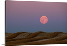 Harvest moon rising over a cut field