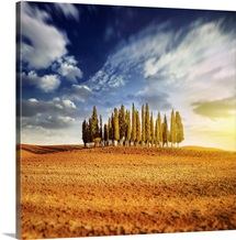 Sunset in a golden field with a row of cypress trees, Italy, Tuscany