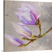 Magnolia on Silver Leaf I