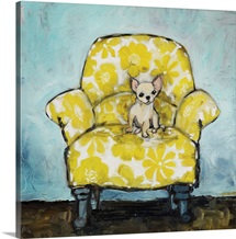 Chihuahua on Yellow Chair