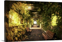 A vine covered tunnel with seats