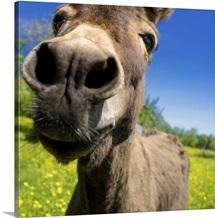 Wonky Donkey I