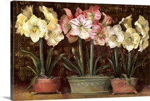 Amaryllis on Brown