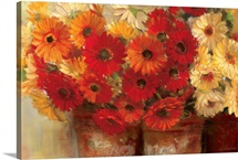 Chelsea Gerberas