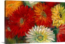 Gerberas