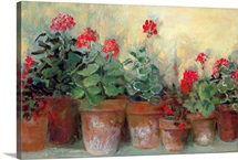 Kathleen&amp;#39;s Geraniums