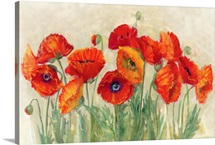 Vibrant Poppies