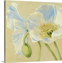 White Poppies II