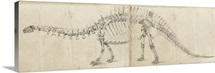 Dinosaur Study I