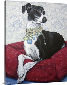 Italian Greyhound on Red