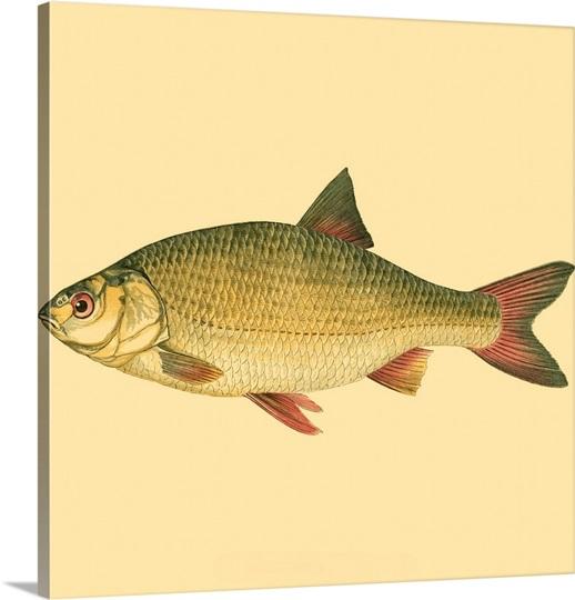 Small antique fish ii photo canvas print great big canvas for Big fish printing