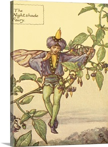 The Nightshade Fairy