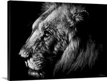Wildlife Scratchboards I