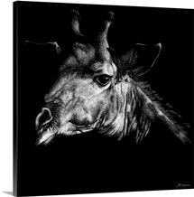 Wildlife Scratchboards VI
