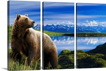 Grizzly stands in front of lake with Mt. Mckinley in the background, Alaska