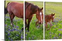 Horse on bluebonnet trail near Ennis, TX.