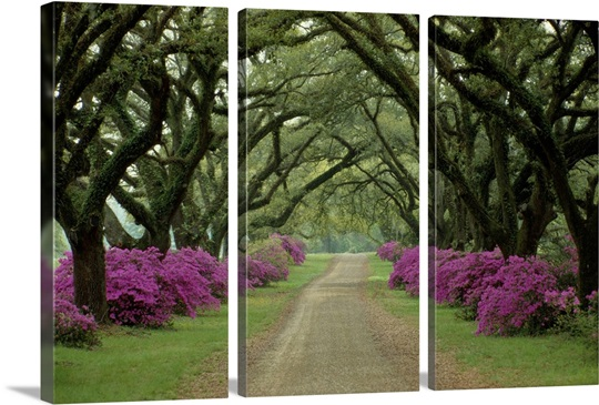 A beautiful pathway lined with trees with purple bushes at their bases