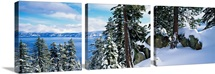 Snow covered trees on mountainside, Lake Tahoe, Nevada