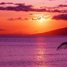 Hawaii, Maui, Tropical Sunset With Palm Tree