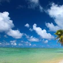 Hawaii, Palm Tree Leaning Over Beach