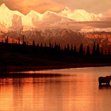Moose Kissing in Wonder Lake Denali NP Digital Composite
