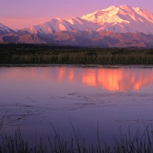Mt McKinley Relfected in Tundra Pond Denali NP AK