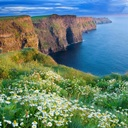 http://static.greatbigcanvas.com/images/square/alaska-stock/summer-daisies-growing-in-abundance-on-cliffs-of-moher-county-clare-ireland,1421302.jpg?max=128