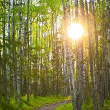 Sun Setting Behind Trees And Over A Path In Bicentennial Park, Alaska