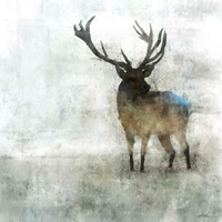 Silent Stag