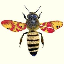 Honey Bee, 2010